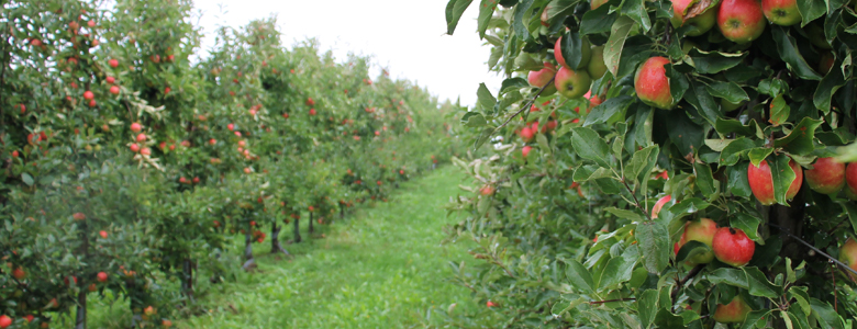 Compass Group visits the island of fruit
