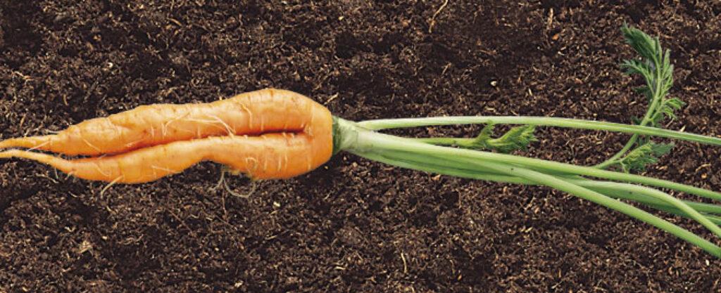 Compass Groups slår et slag for skæve gulerødder